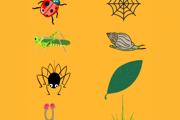 https://www.middletownautism.com/social-media/minibeasts-and-their-habitat-matching-activity-7-2021